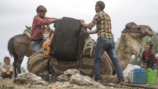 Loading the camel with the tent fabric, Sarıkeçili Turkmens, Mersin, Western Turkey , 2015