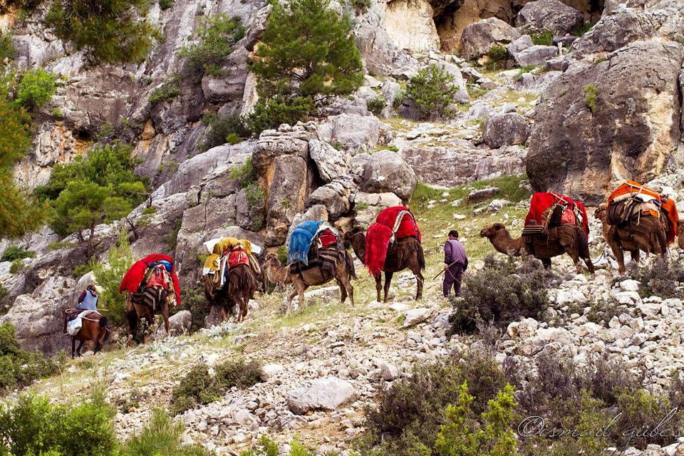 Anatolian Turkmens migrating to winter camps, Taurus Mountains, Turkey, 2016