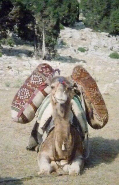 The positionnin of nomadic sacks on the camel, Sarıkeçili Turkmens, Mersin area, Southern Turkey