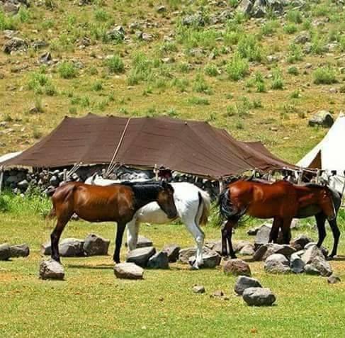 Beritan Tribe, in a pasture on Şarafettin Mountains Bingöl, Eastern Turkey