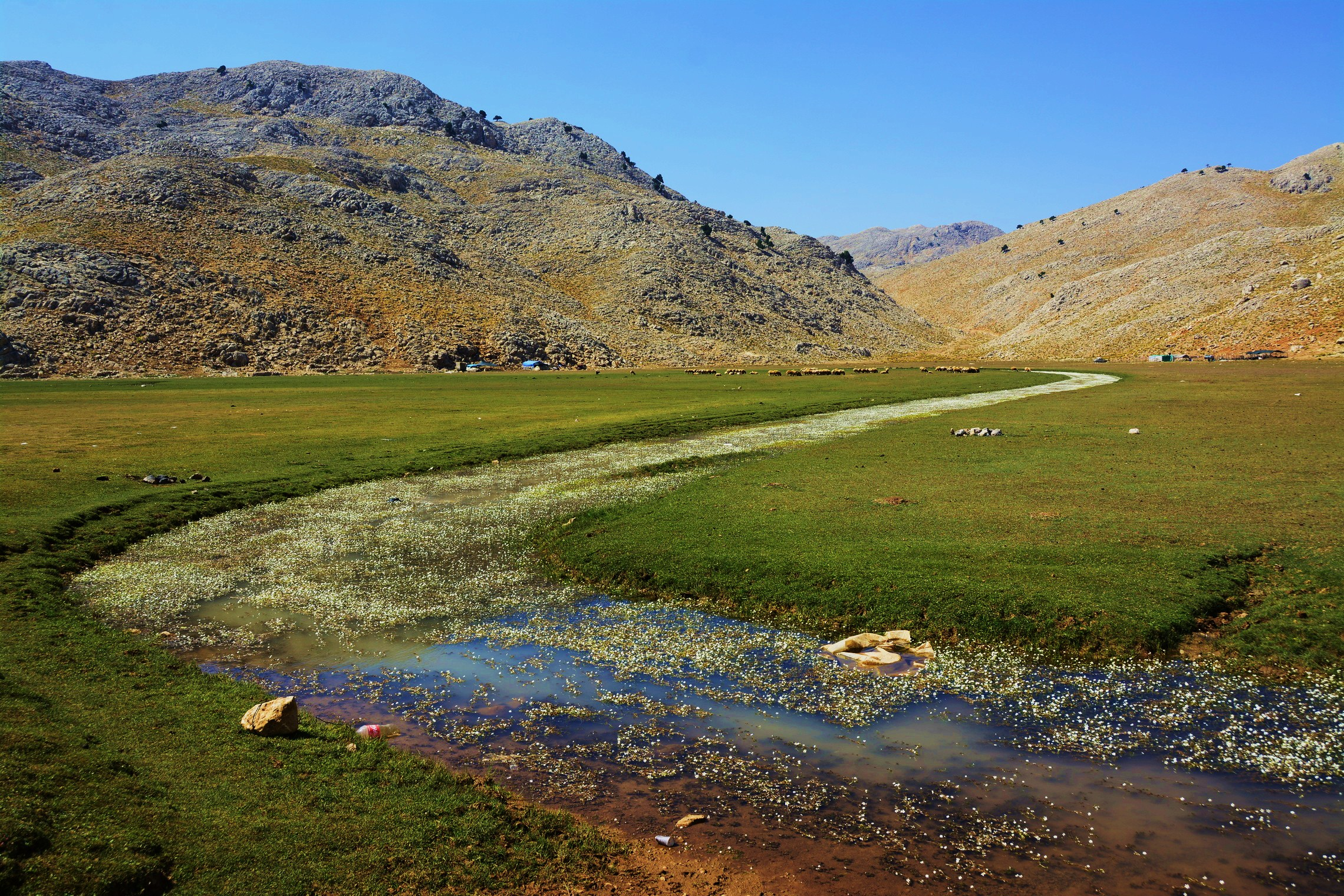 Pastures above 2000 meters covered with alpine graze suitable to feed sheep and goat herds