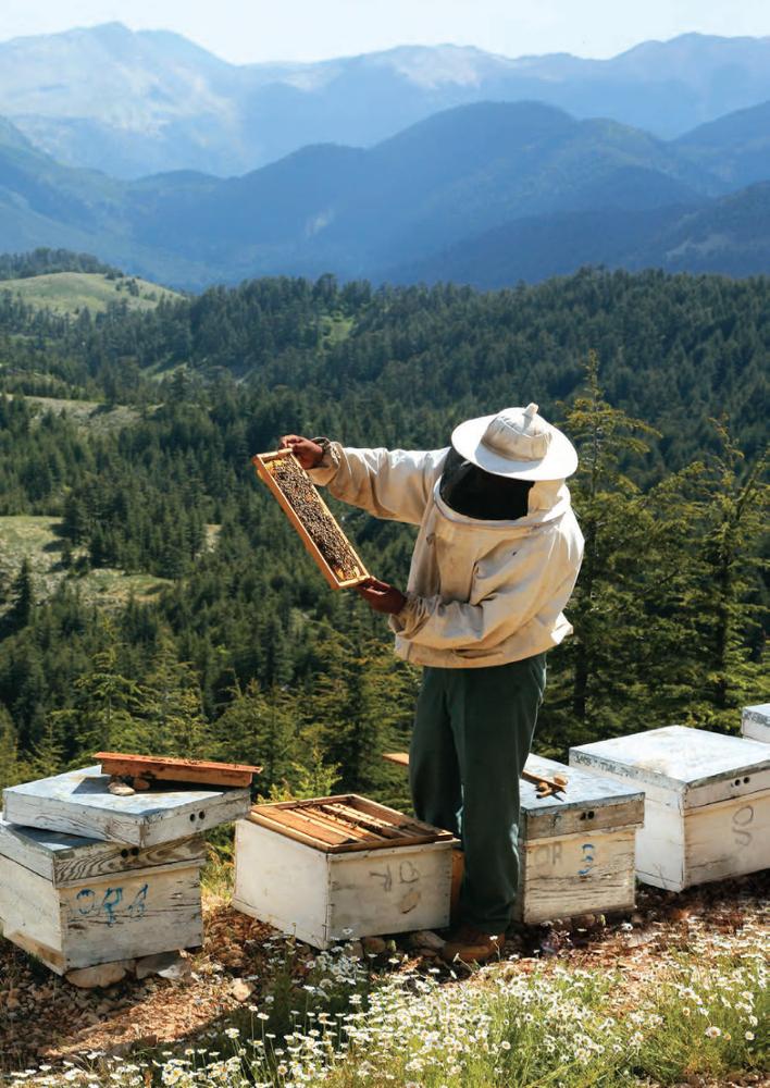 Pine honey is a true health source
