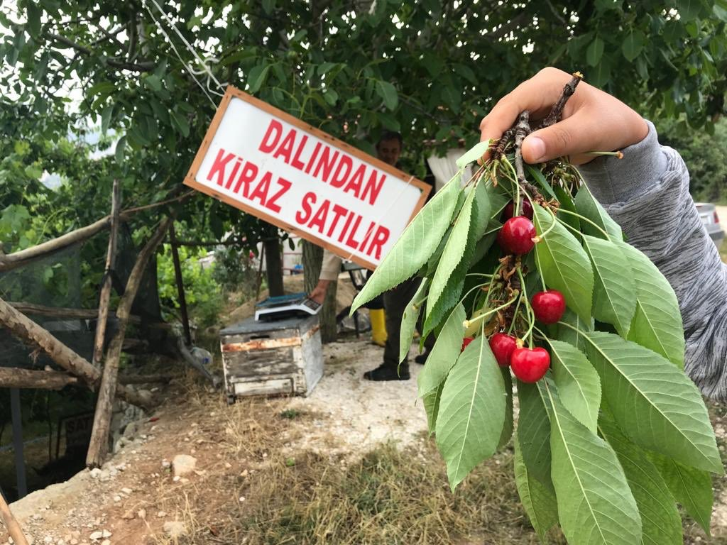 """Cherry sales from the branch"" Gömbe, Antalya South Western Turkey 2018"