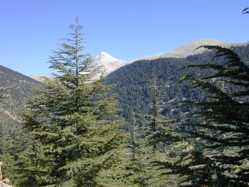Cedar and Juniper covered mountains between 1600 and 2000 meters of altitude