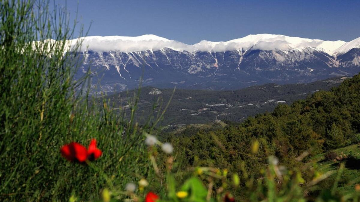Pine forests surrounding the Mediterranean plains
