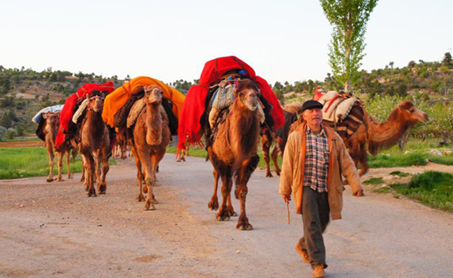 Perdeh textiles, put on the loaded camel and used as packing sheet during the migration, Sarıkeçili Tribe, Mersin Western Turkey, 2018